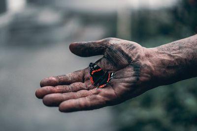 Main tenant un papillon